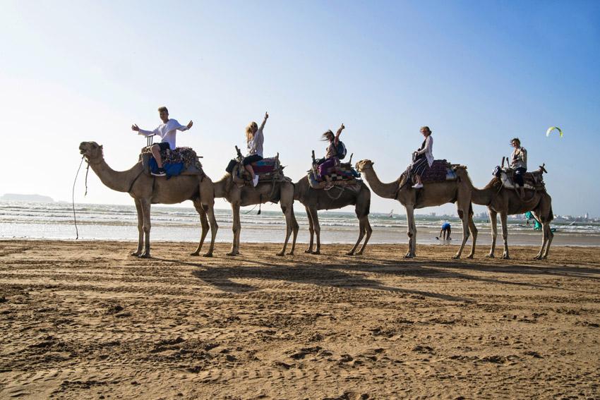 Marocco in Africa / Essaouira: camel rides