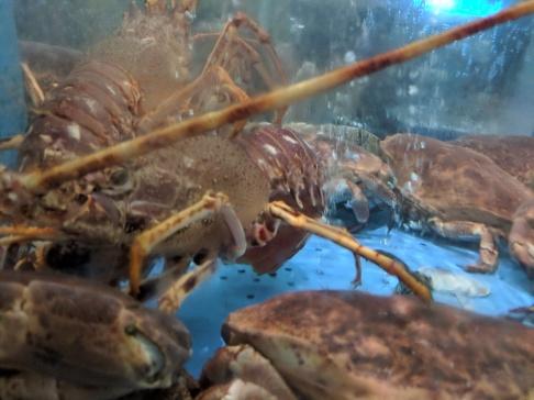 Lobster in an aquarium
